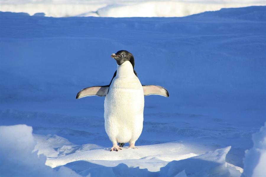 Quand Google Penguin menace la monétisation de votre blog